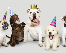 Join Us to Celebrate Your Rescue Dog's Birthday